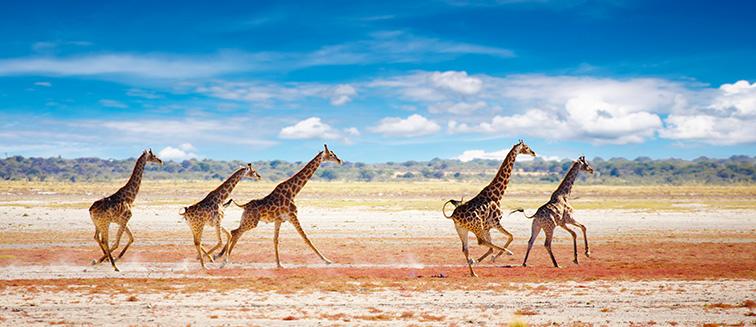 Parc National Etosha